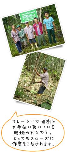 マレーシアで植樹をお手伝い頂いている現地の方々です。とってもスムーズに作業をこなされます!